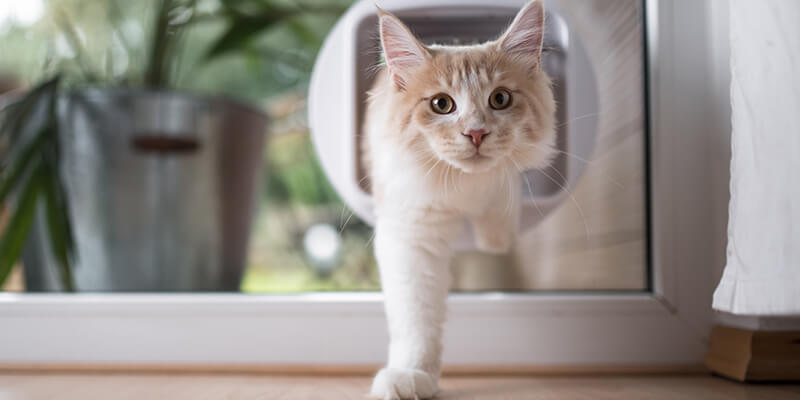 Cat walking through cat flap